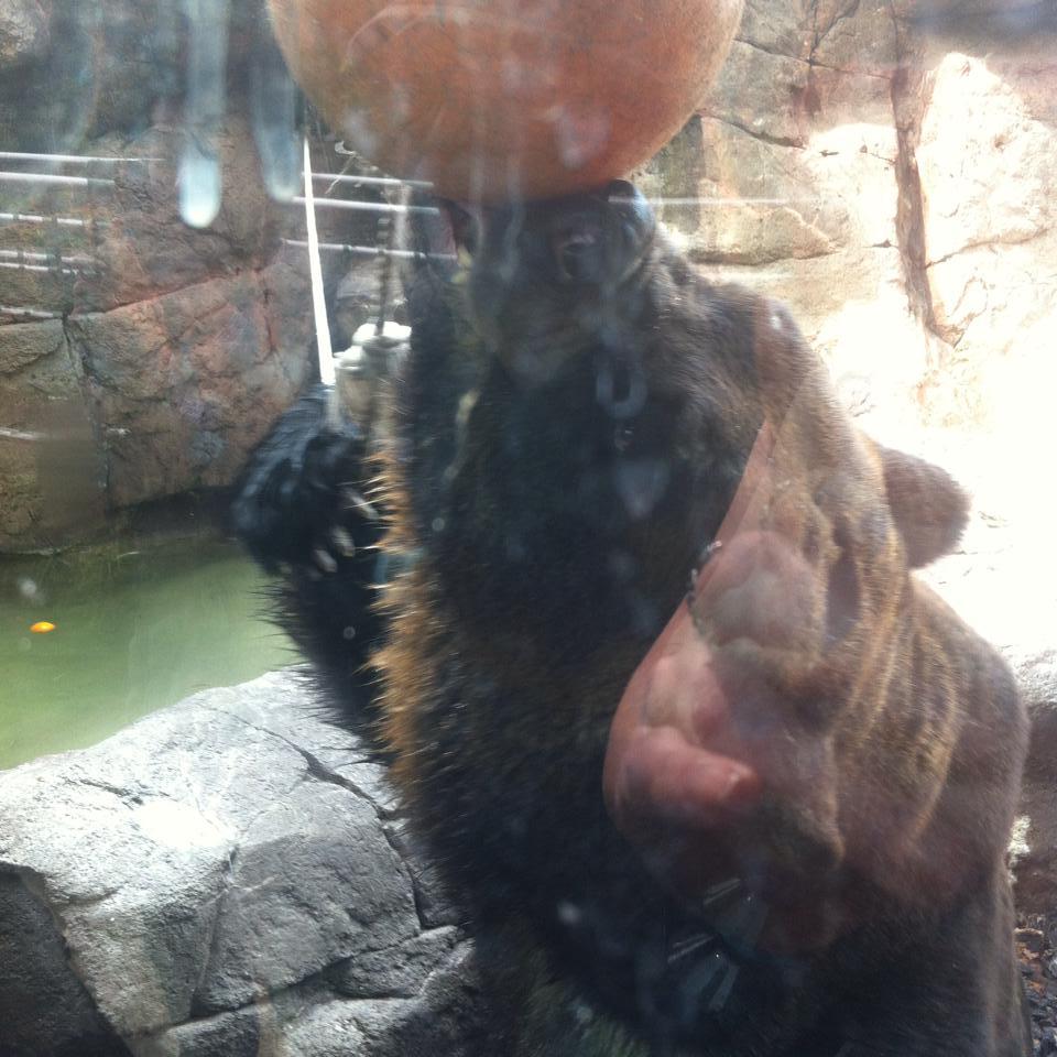 bearball