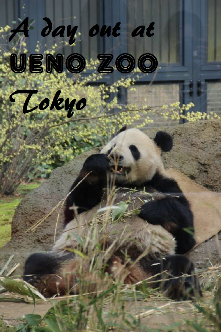 A day out at Ueno Zoo, Tokyo