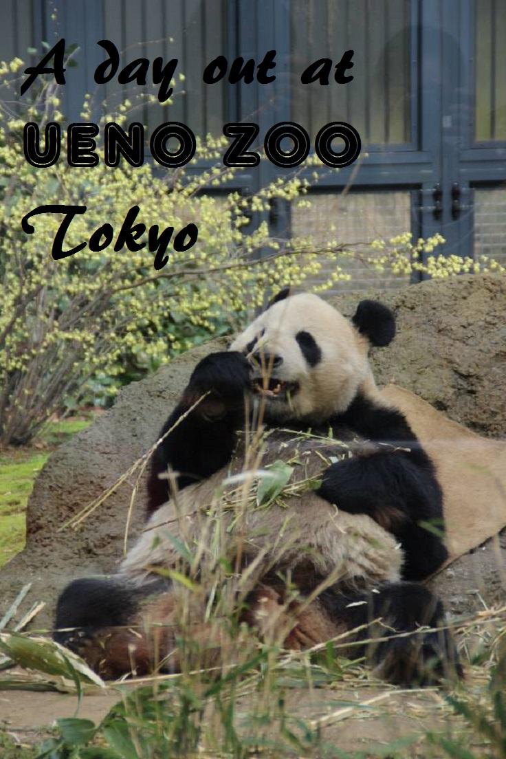 panda, ueno zoo, tokyo