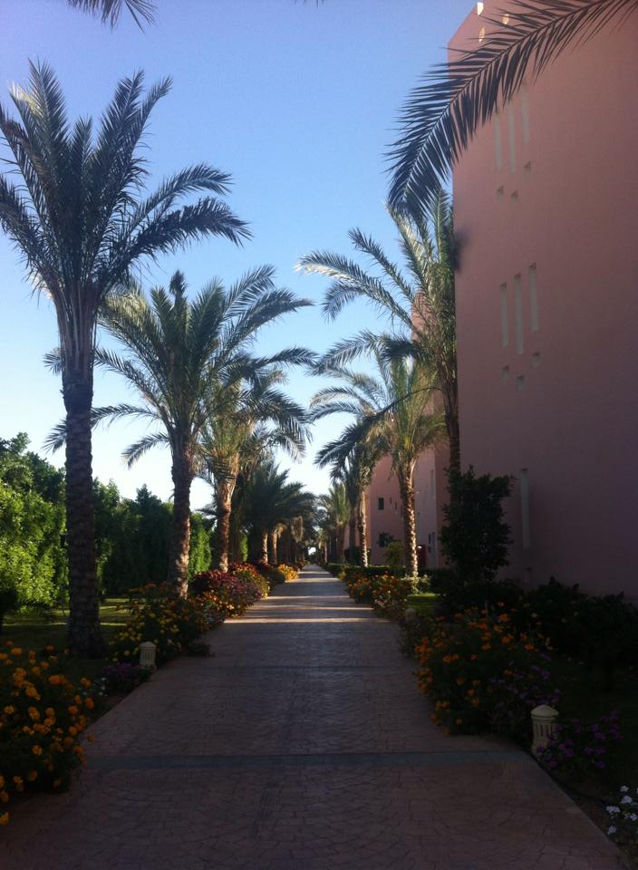 Palm tree lined walkways