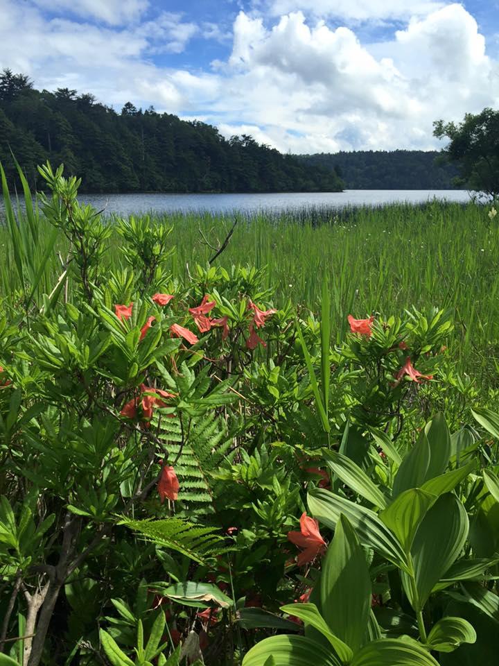 Beautiful Oze national park