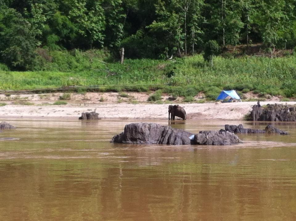 Elephant bathing in the Mekong river